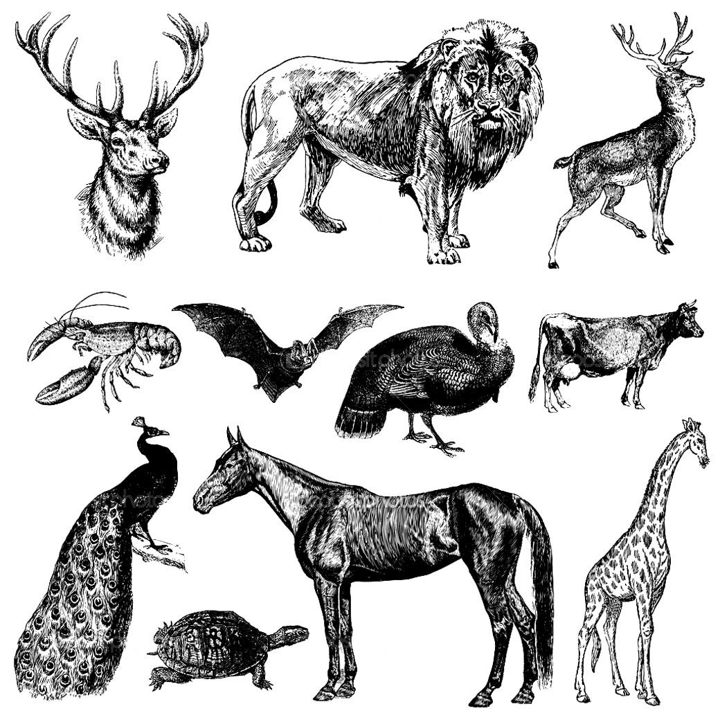 Gravure très vintage représentant divers animaux : lion, paon, girafe, chauve-souris, homard, tortue, vache ...