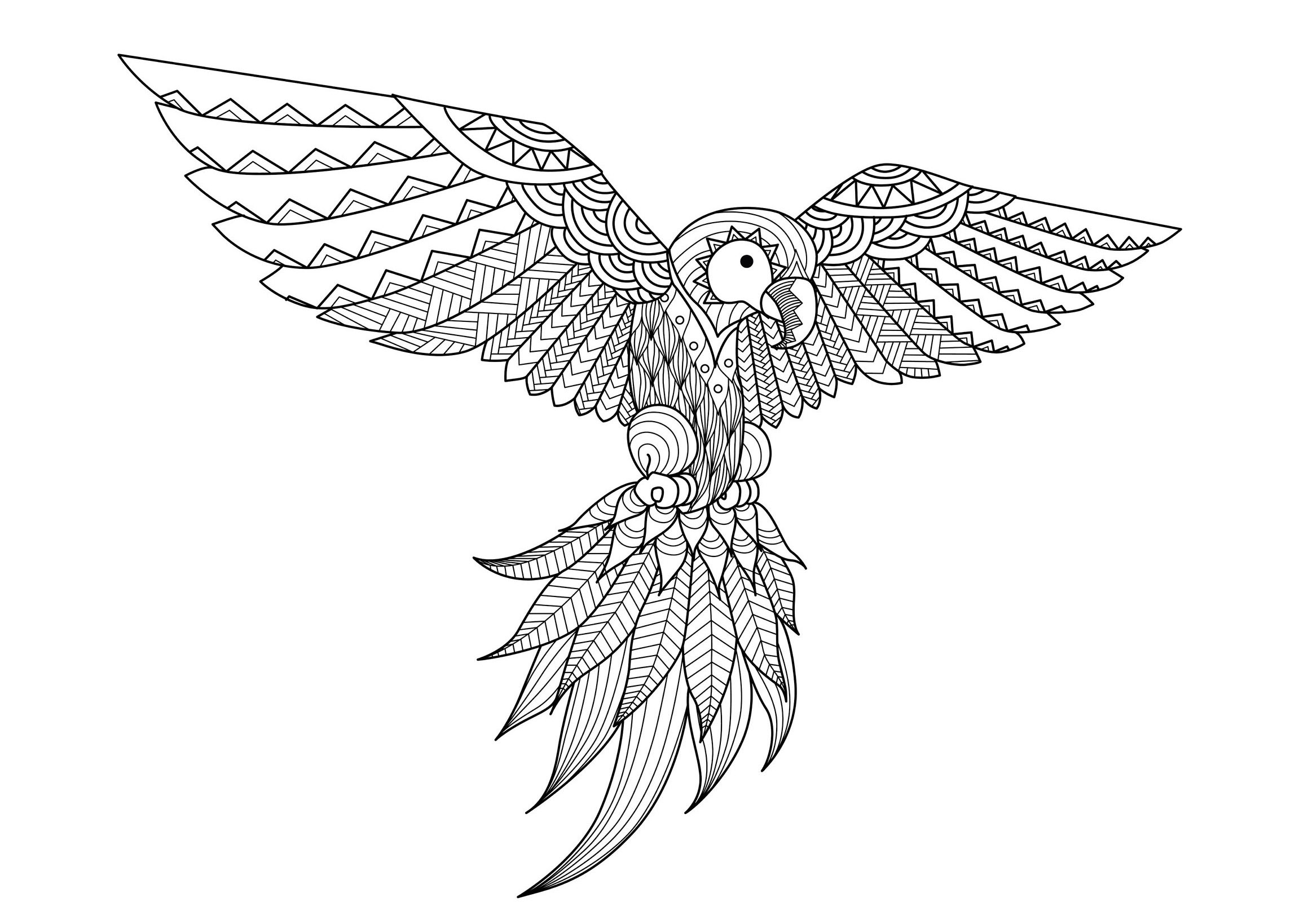 coloriage adulte zentangle perroquet par bimdeedee