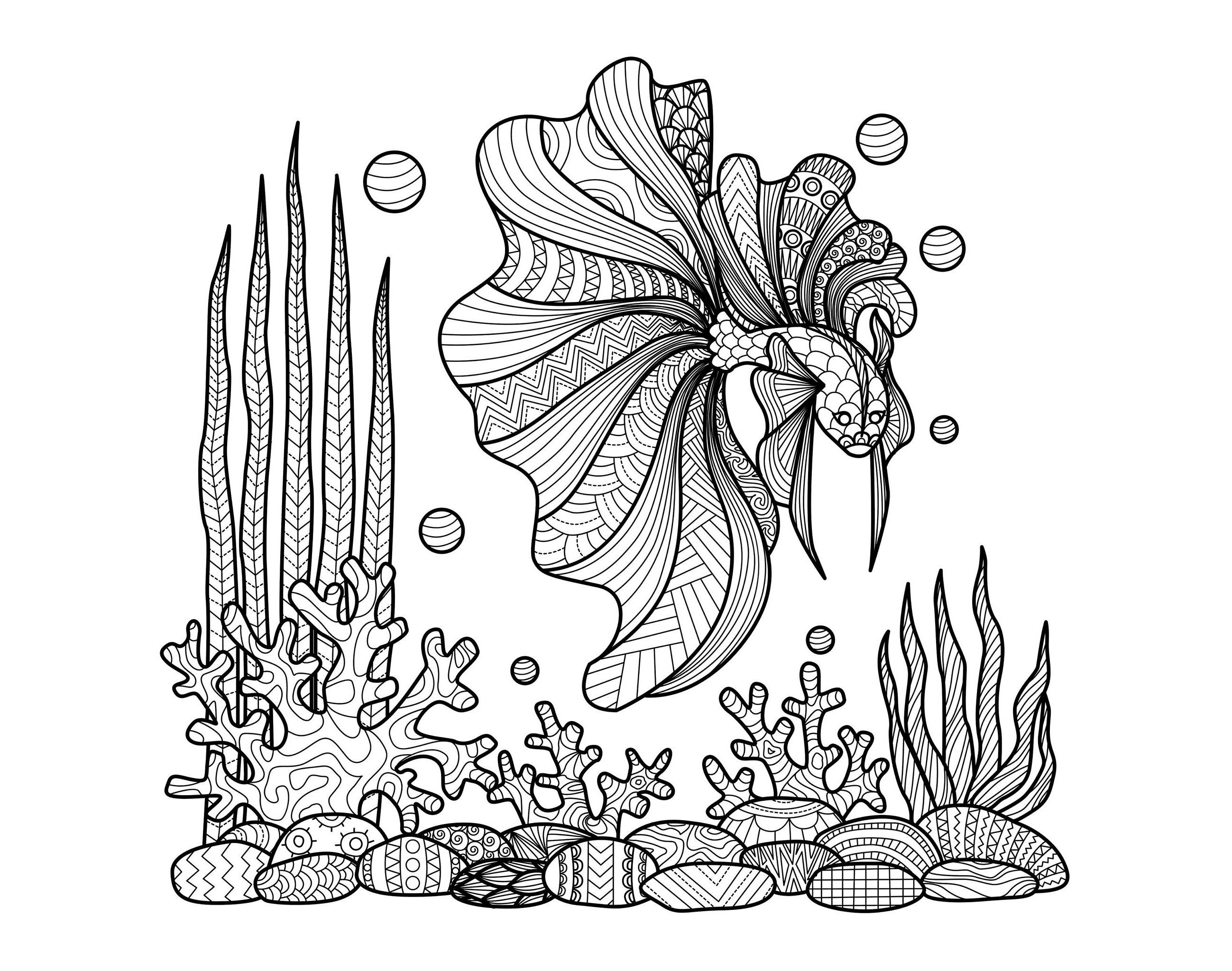 Zentangle poisson sur coraux zentangle coloriages - Coloriage pour adulte ...