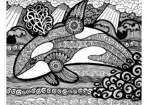 Lignes de l'orque