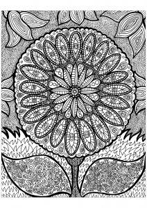 Lignes de la fleur