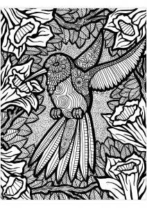 Lignes du colibri