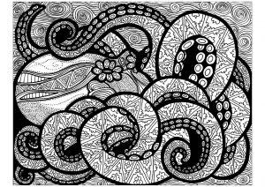 Lignes du poulpe