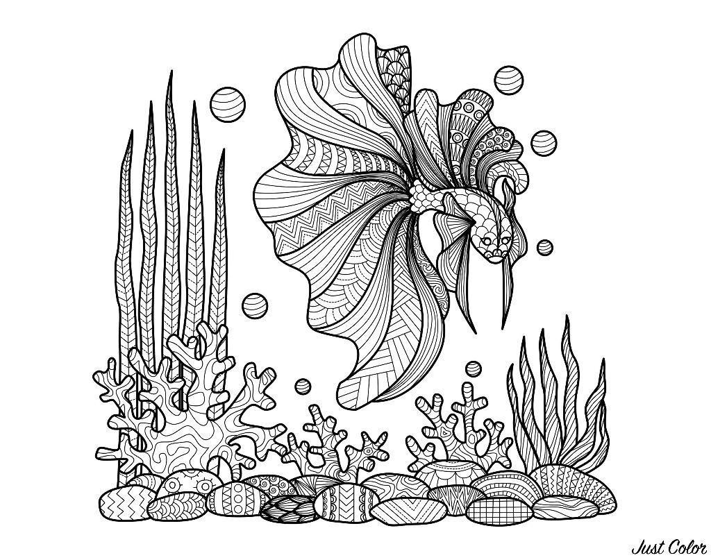 Zentangle poisson sur coraux