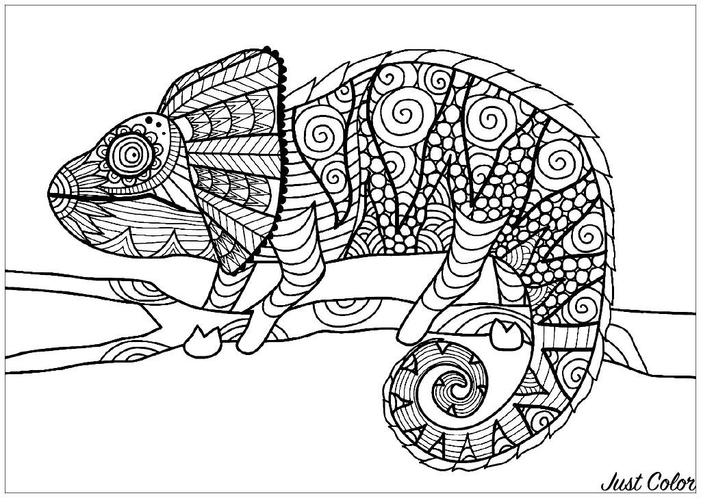 Disegni da colorare per adulti : Camaleonti E Lucertole - 1