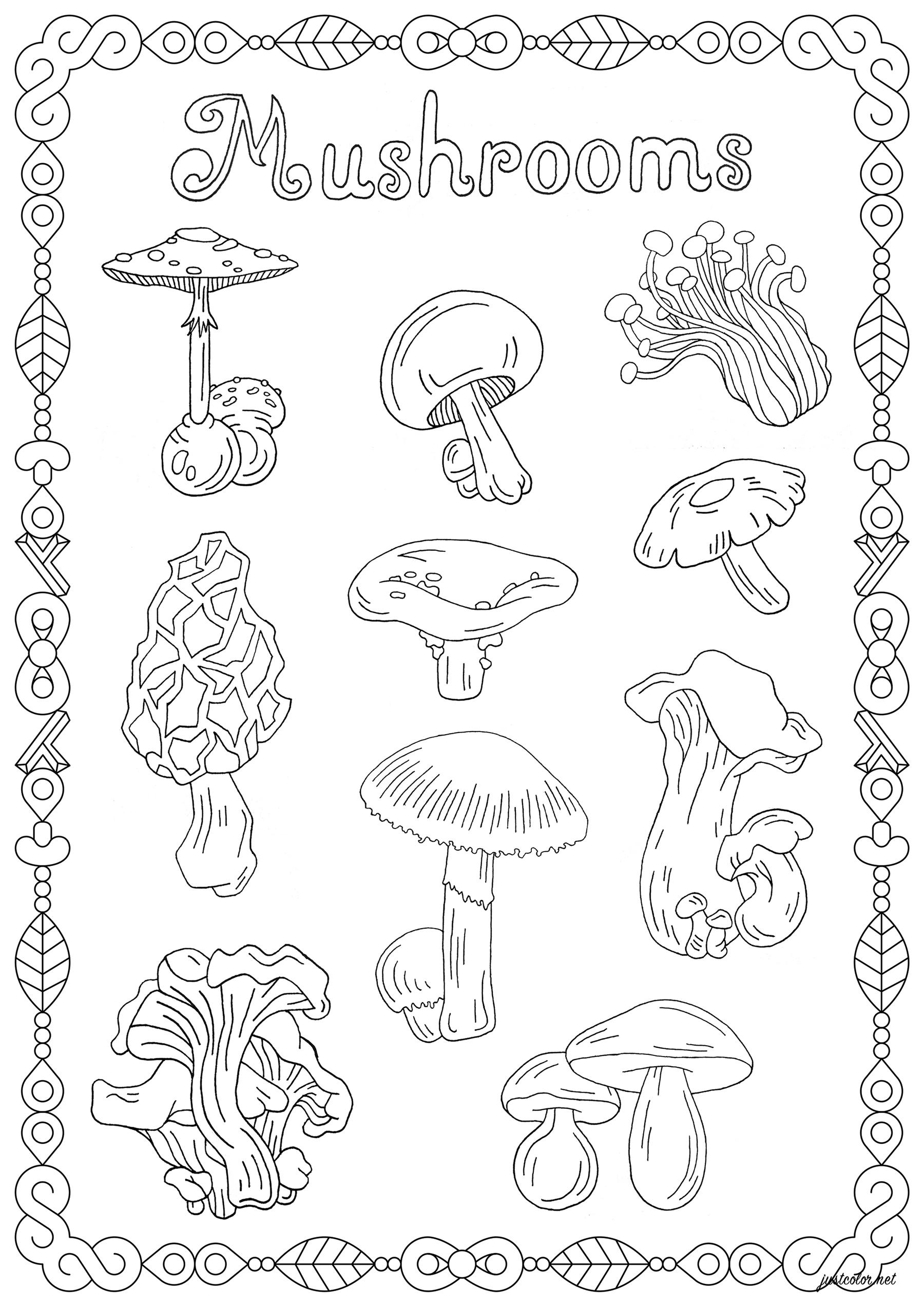Disegni da Colorare per Adulti : Fiori e vegetazione - 1