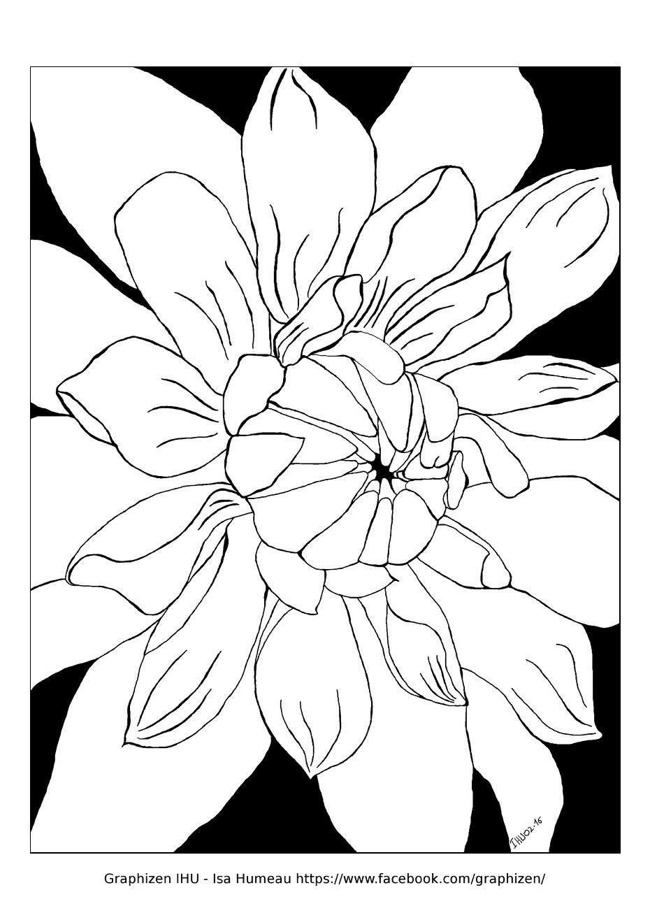 Disegni da colorare per adulti : Fiori e vegetazione - 57