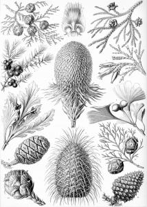 Fiori e vegetazione 34418