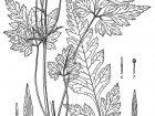 Fiori e vegetazione 59592