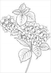 Fiori e vegetazione 76065