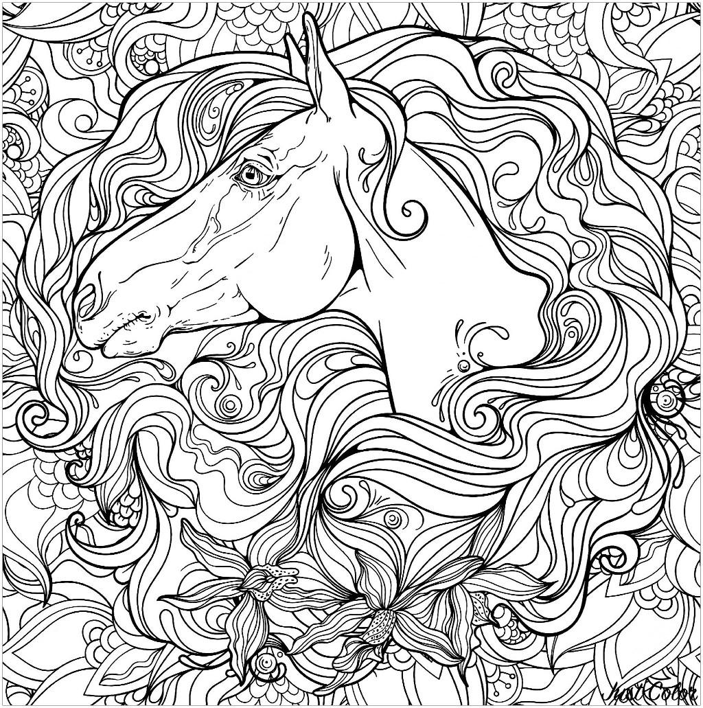 Disegni da colorare per adulti : Cavalli - 1