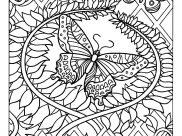 Farfalle e insetti
