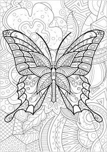 Farfalle e insetti 21962