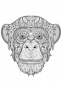 Scimmie 29926