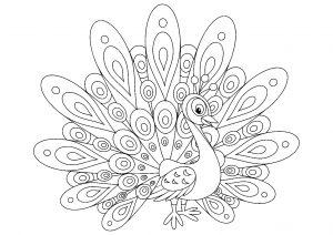 Peacocks 52861
