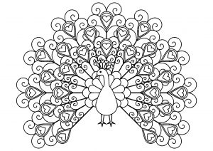 Peacocks 58623