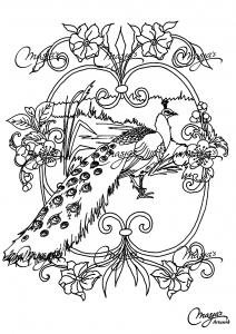 Peacocks 93287