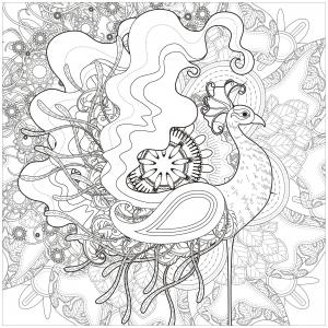 Peacocks 9477
