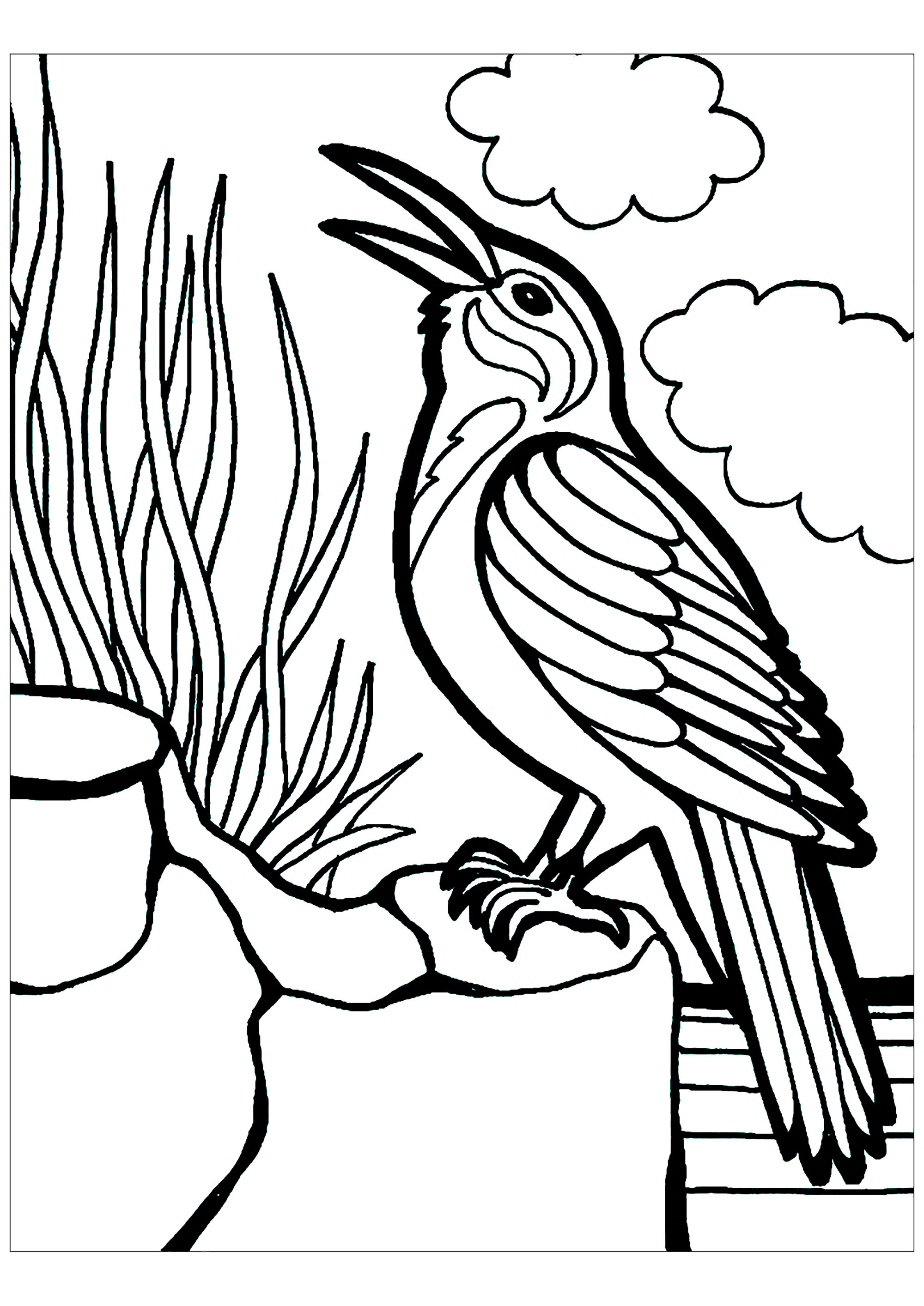 Birds Coloring Pages for Kids - Itsy Bitsy Fun | 2828x2000