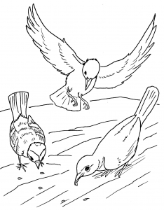 Coloring page birds to print for free