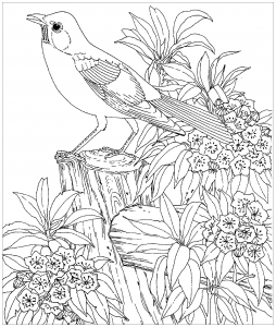 Coloring page birds for children