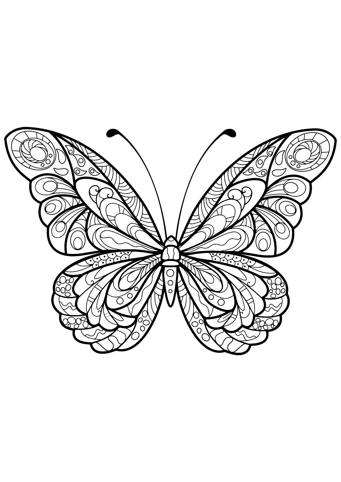 Butterflies for children Butterflies