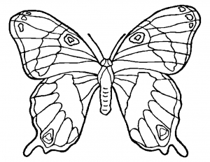 Coloring page butterflies to color for children