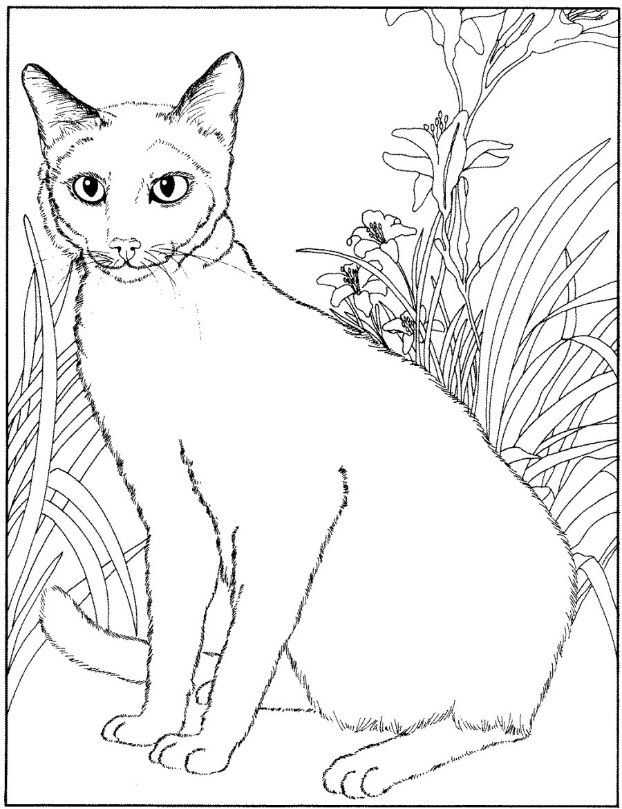 Simple Cat coloring page for kids