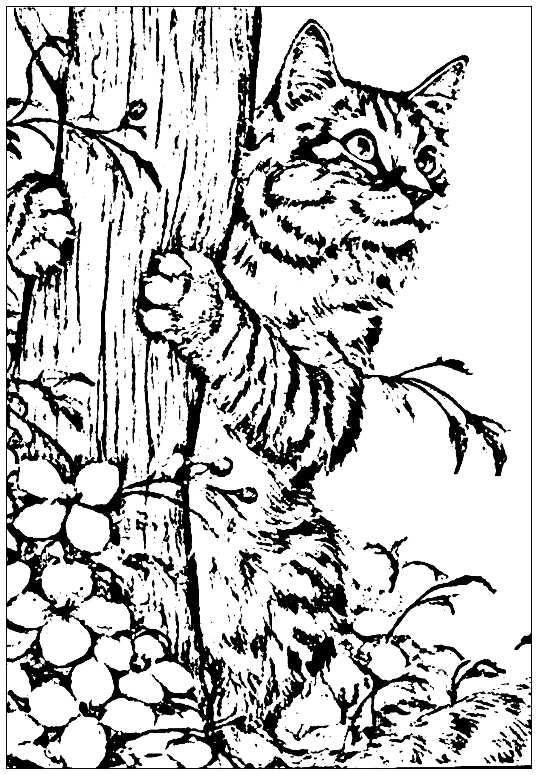 Funny Cat coloring page for kids, created from a photo