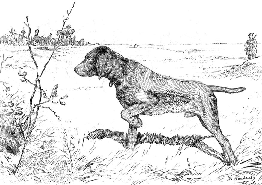 Dog to download - Dogs Kids Coloring Pages