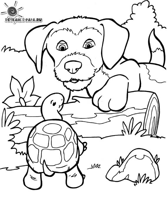 Printable Dog coloring page to print and color for free : Dog and turtle