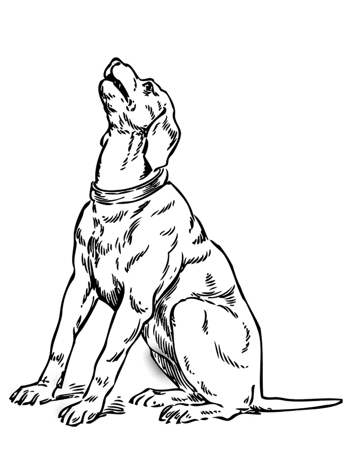 Dog to print for free - Dogs Kids Coloring Pages