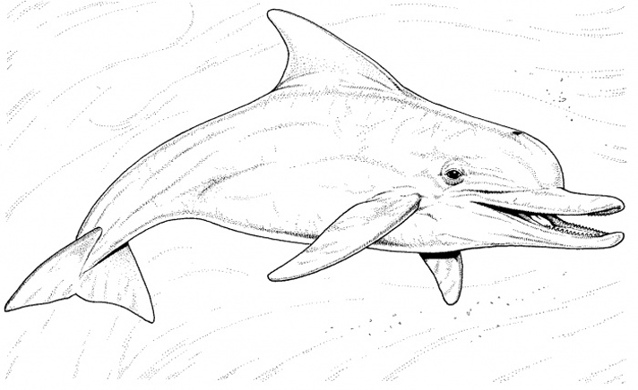 - Dolphins To Download For Free - Dolphins Kids Coloring Pages