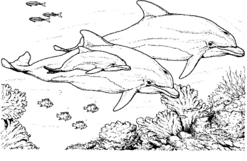 - Dolphins Free To Color For Kids - Dolphins Kids Coloring Pages