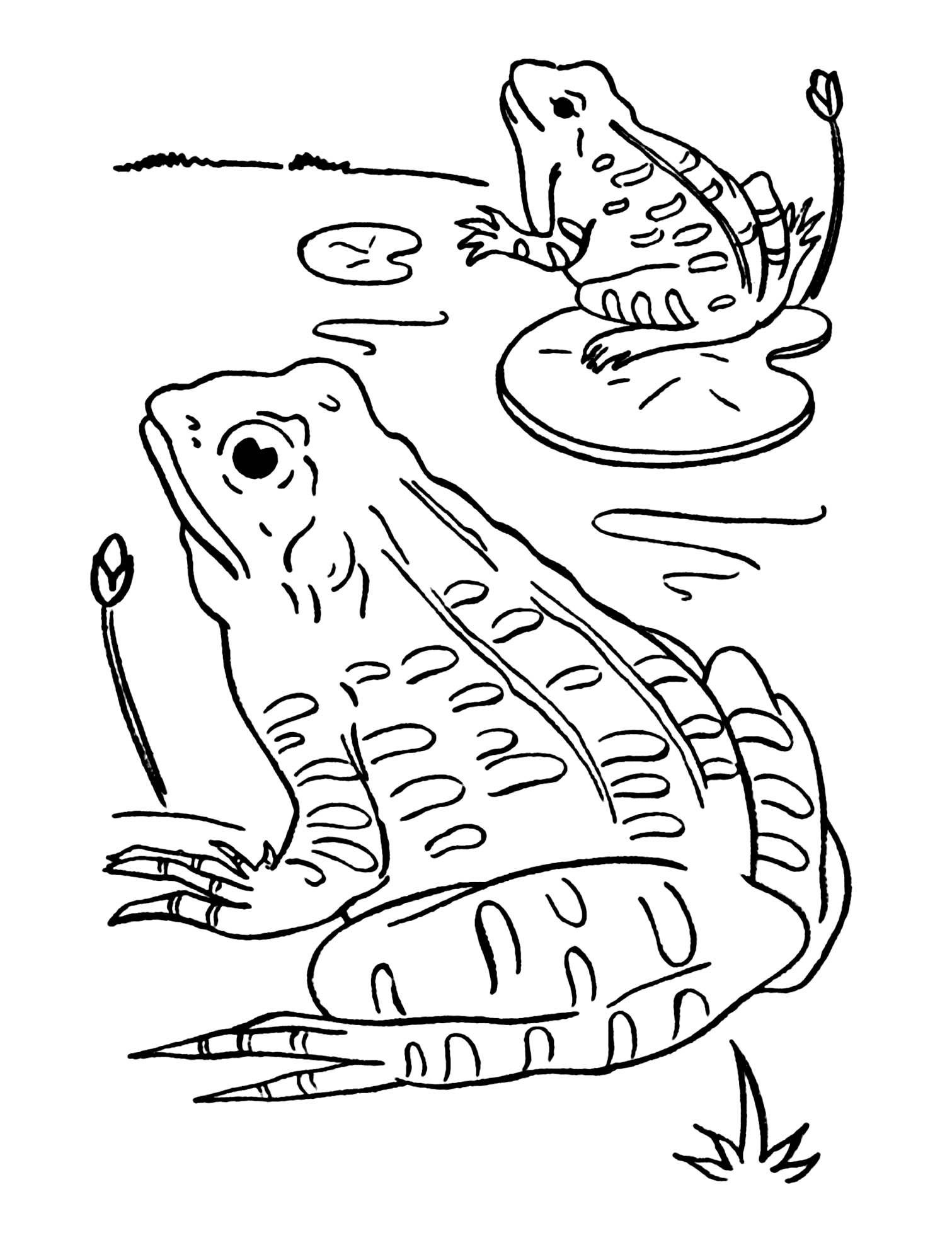 Funny Frogs coloring page for children