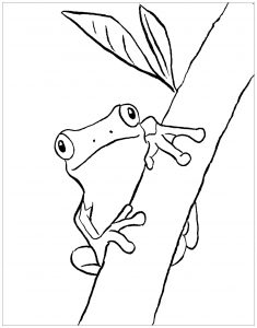 Coloring page frogs for kids