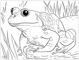 Coloring page frogs to download for free