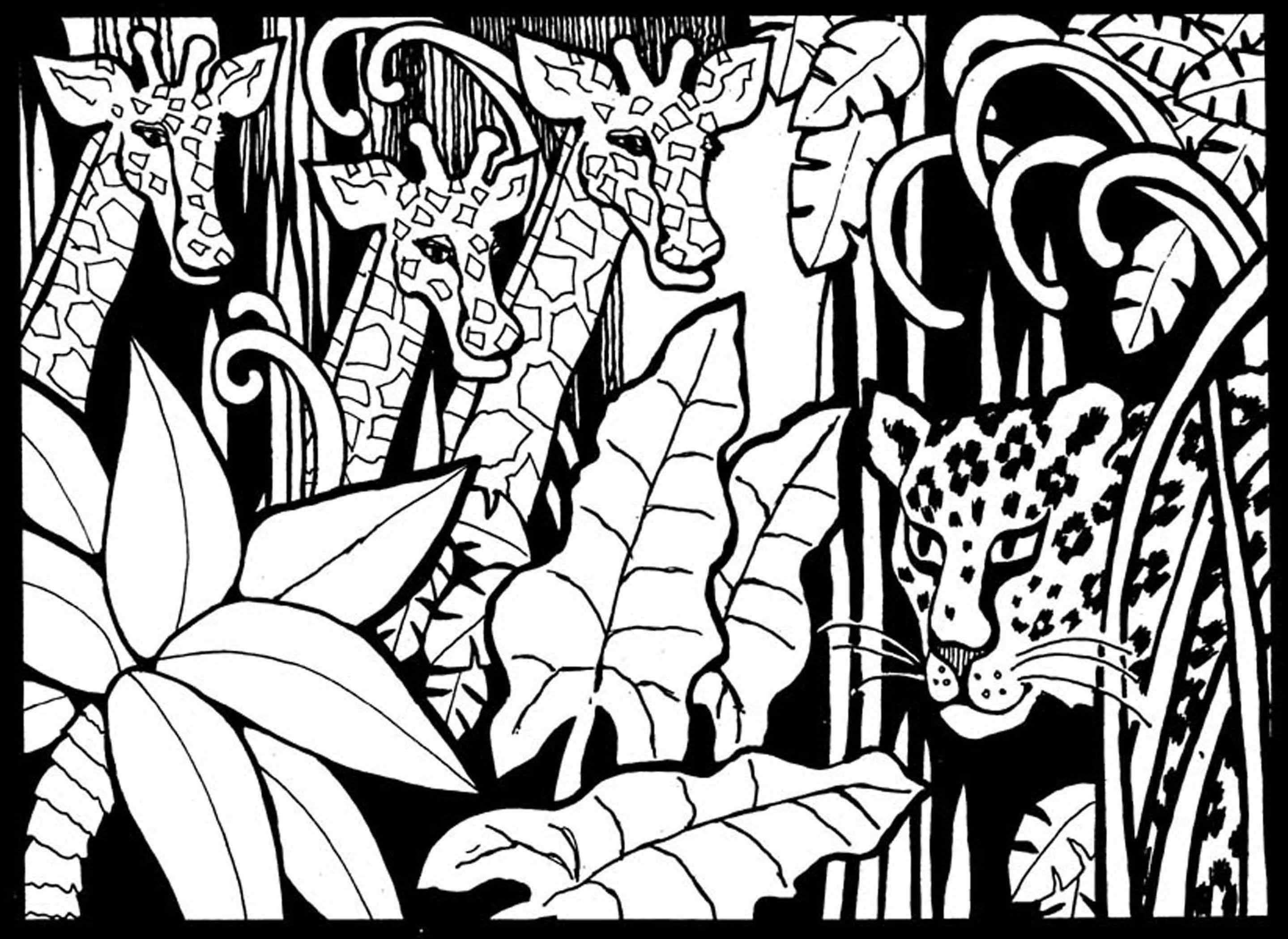 Beautiful Giraffes coloring page to print and color