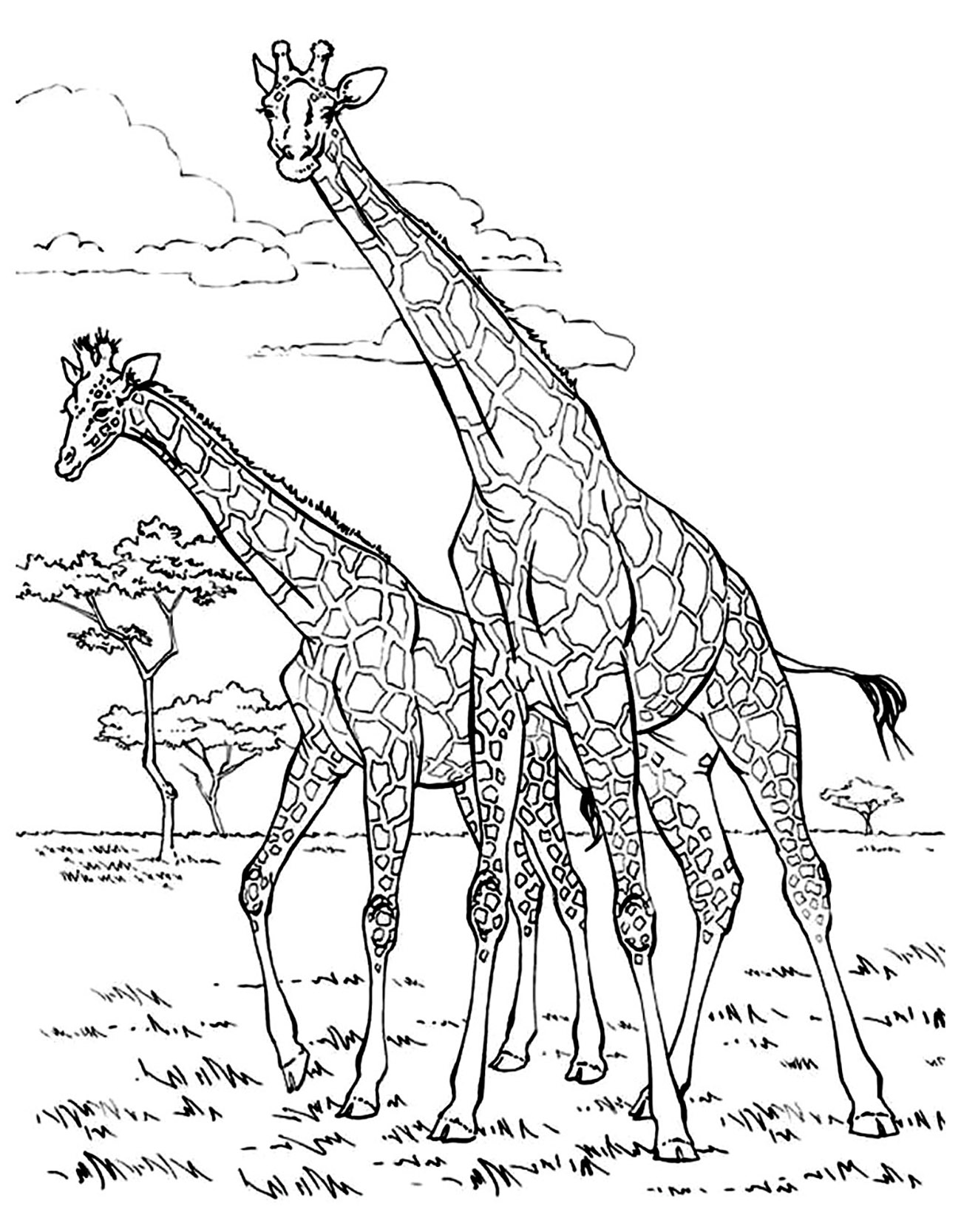 Giraffes coloring page with few details for kids
