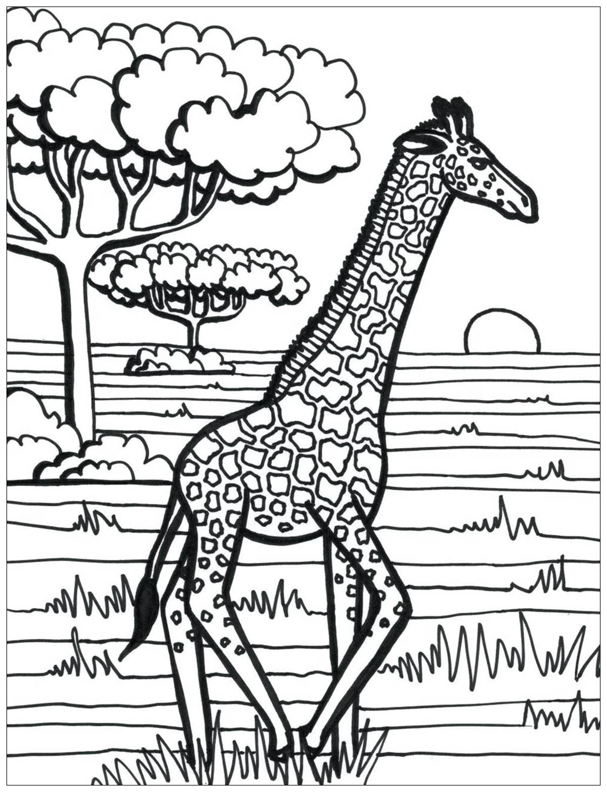 Printable Giraffes coloring page to print and color