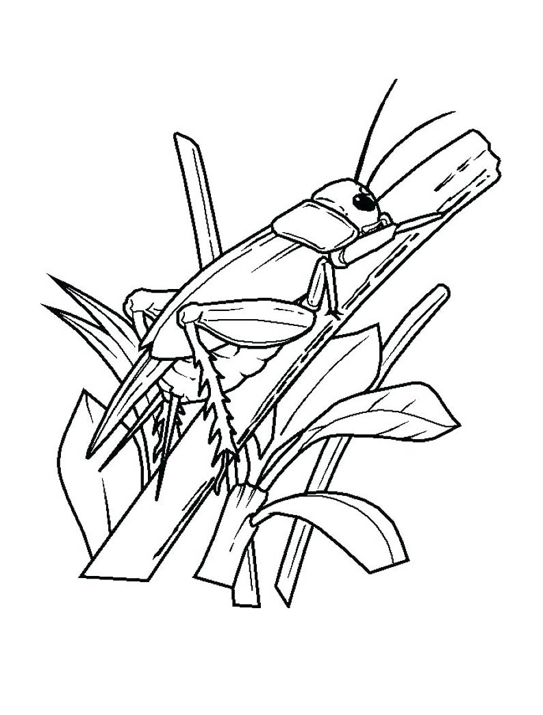 Insects coloring page to print and color for free