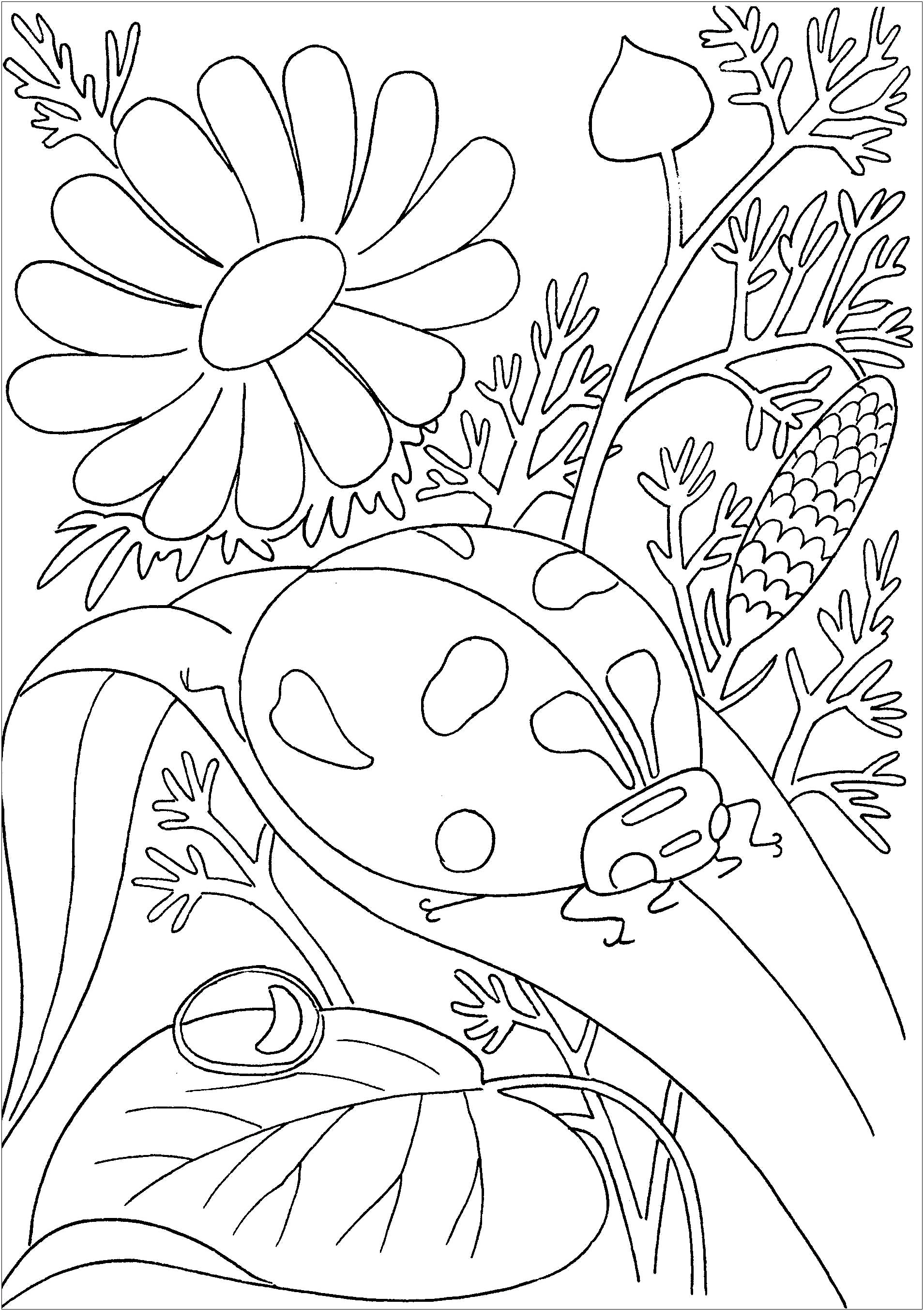 Free Insects coloring page to print and color, for kids