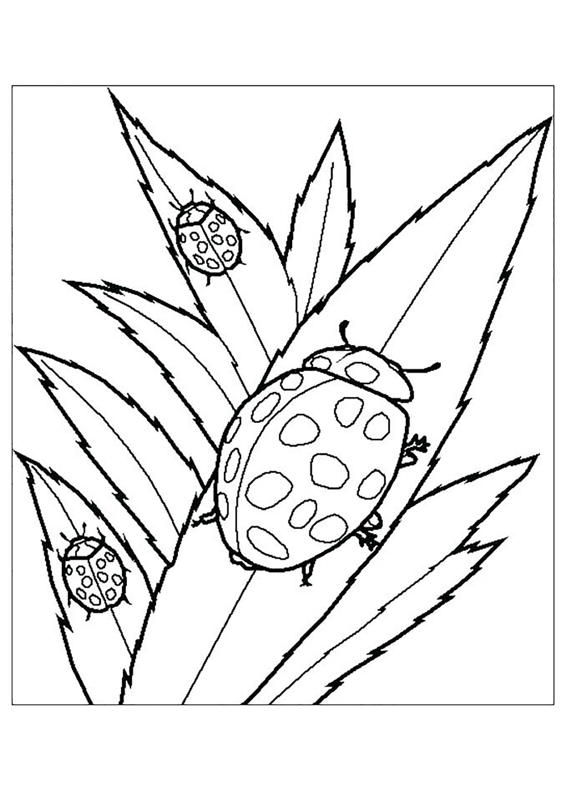Beautiful Insects coloring page