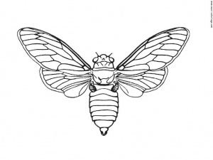 Coloring page insects to print