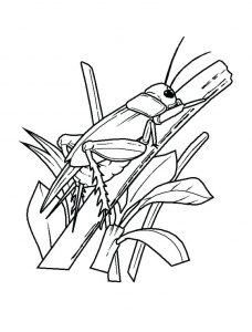 Coloring page insects to print for free