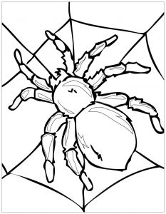 Coloring page insects to download