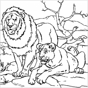 Lion Free Printable Coloring Pages For Kids Совершенно сободные и бесплатные контуры. lion free printable coloring pages