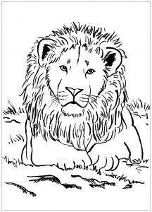 Coloring page lion to print for free