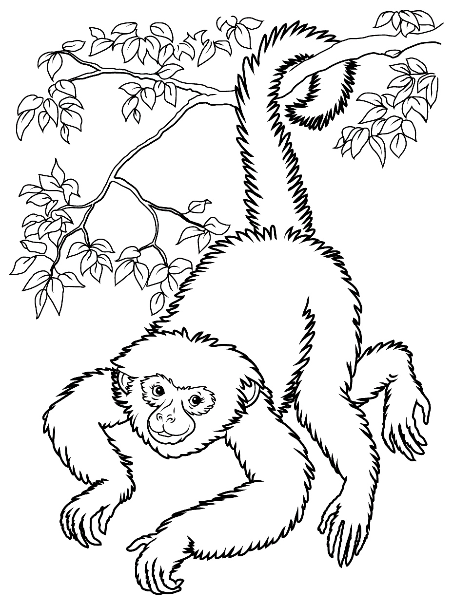 Monkeys to print for free - Monkeys Kids Coloring Pages