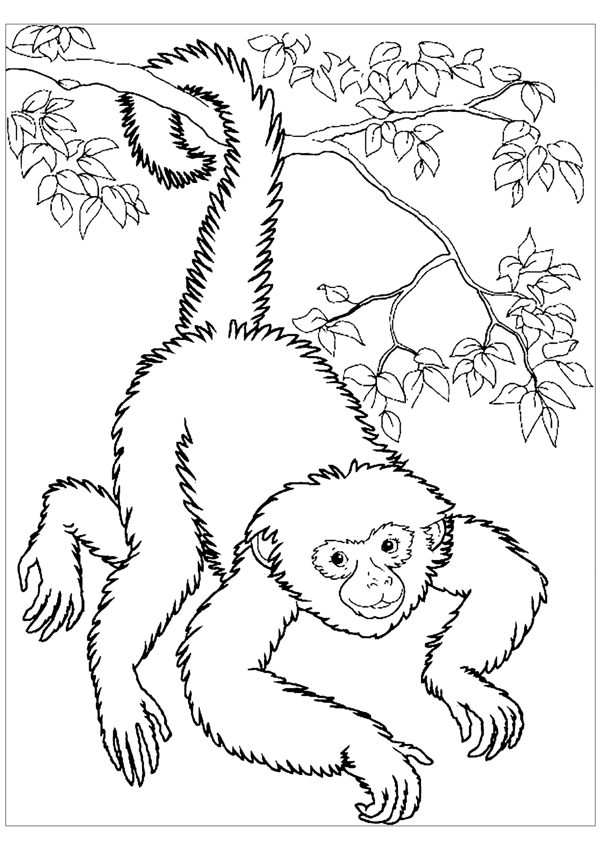 Monkeys free to color for kids - Monkeys Kids Coloring Pages